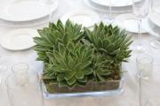 home-cut_succulents